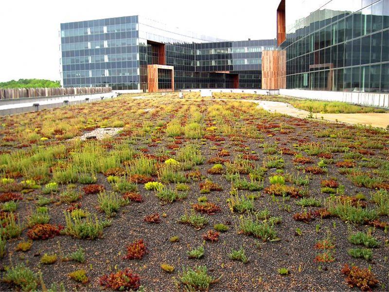 Een extensief groendak bevat vooral sobere mossen en grassen maar kan voor wat kleur zorgen in een grijze omgeving.
