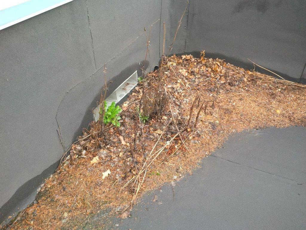 Je zou toch twee keer per jaar je dak moeten betreden om na te gaan of de regenwaterafvoeren vrij zijn, of er zich geen stof en vuil heeft opgehoopt en of er nog geen onkruid gegroeid is.