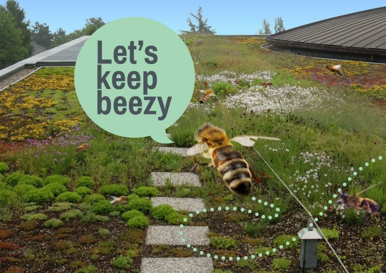 Avec 'Api-toit', IBIC donne une nouvelle dimension à la biodiversité