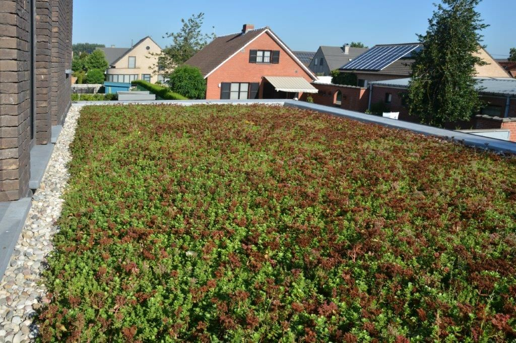 Dat de omschrijving van een gekleefd daksysteem meestal moet worden gewijzigd als er een groendak bovenop de afdichting komt te liggen, durven architecten weleens over het hoofd zien. (Foto: Derbigum)