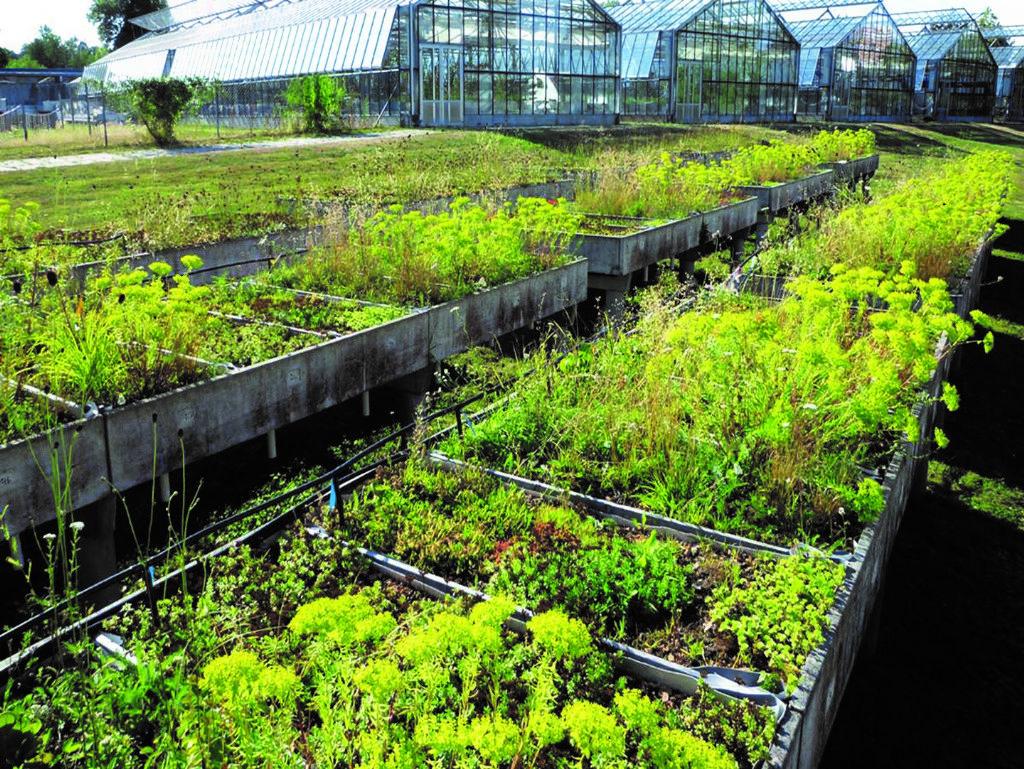 Zinco Urban Climate Roof: groendaksysteem met maximale verdampings- en verkoelingscapaciteit