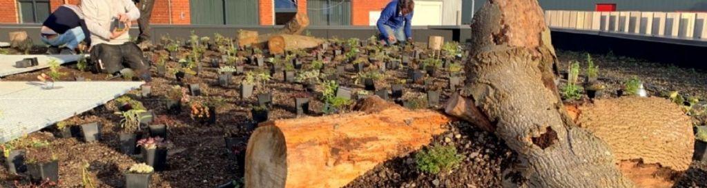 Welke beplanting hoort (niet) thuis op een groendak?