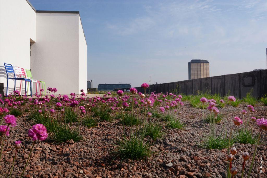 Senaat groene daken, Brussel