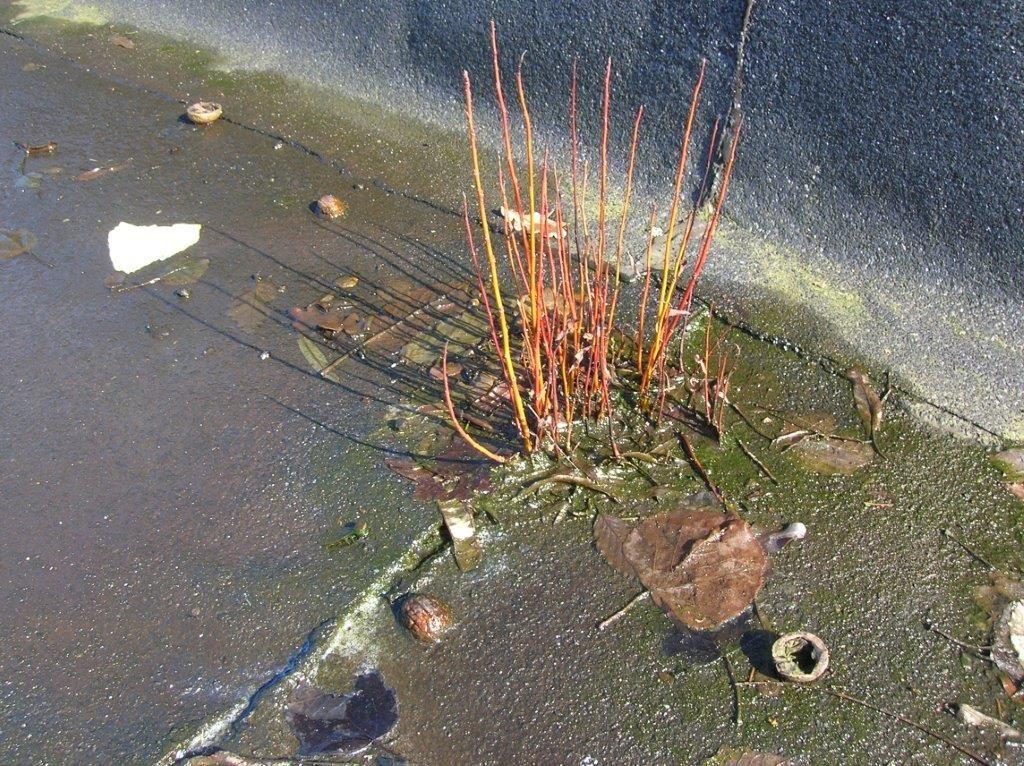Plantaardige wortels kunnen zeer agressief zijn en je dakbedekking op termijn ernstig beschadigen.