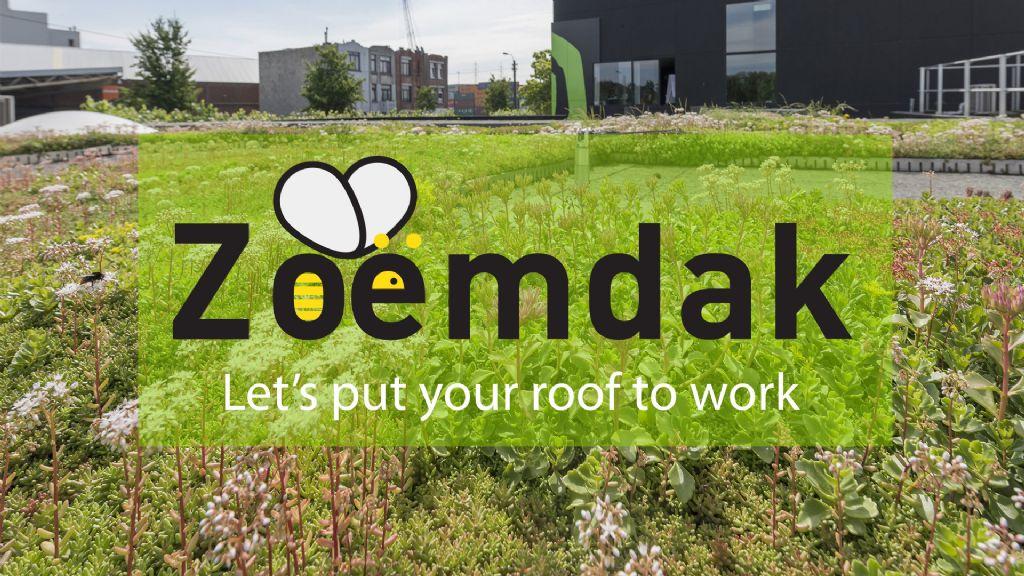 De Boer Green zoekt platte daken voor experiment met biodivers groendak