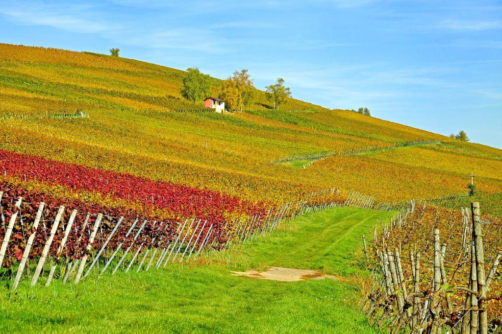 Steen & Been: Wijnbouw