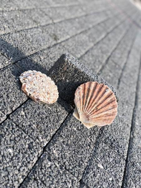 Des pavés anti-canicule à base de coquillages
