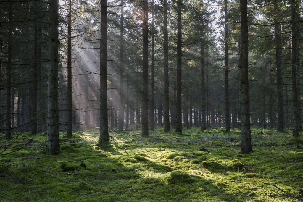 Verantwoorde bosbouw