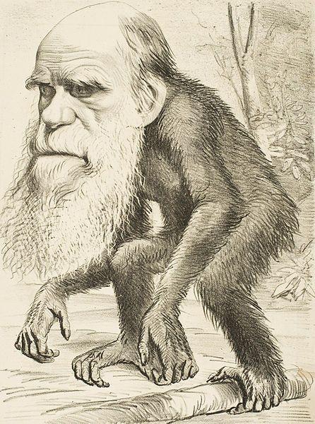 Steen & Been: Darwinisme