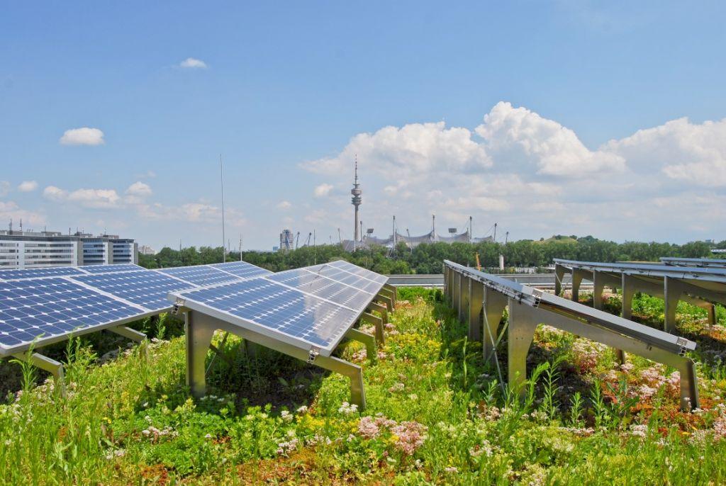 Zonnepanelen op groendaken: voordelig voor de natuur en het rendement van de panelen