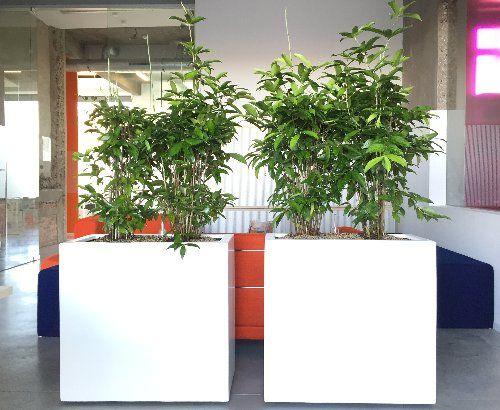 Interieurbeplanting creëert rust en een betere luchtkwaliteit en akoestiek
