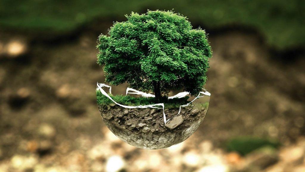 De kracht van biomimicry