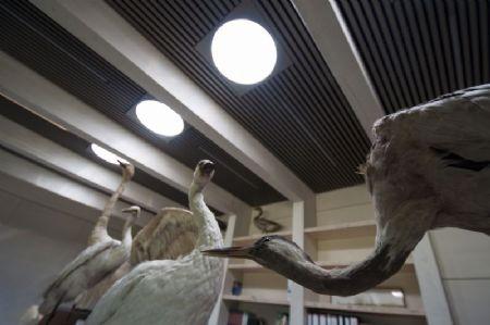 Bezoekerscentrum Het Zwin_10